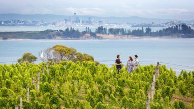 Wine tasting on Waiheke island with Auckland City and Motuihe island visible in the background.