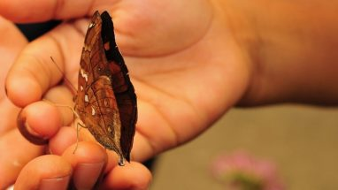 Butterfly lands on kids hand at Butterfly Creek